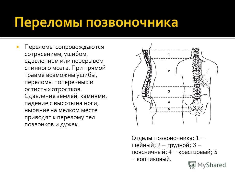 Переломы сопровождаются сотрясением, ушибом, сдавлением или перерывом спинного мозга. При прямой травме возможны ушибы, переломы поперечных и остистых отростков. Сдавление землей, камнями, падение с высоты на ноги, ныряние на мелком месте приводят к