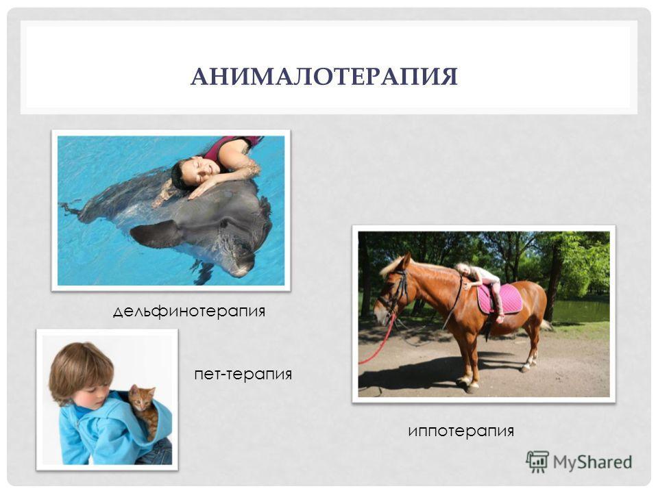 АНИМАЛОТЕРАПИЯ пет-терапия иппотерапия дельфинотерапия