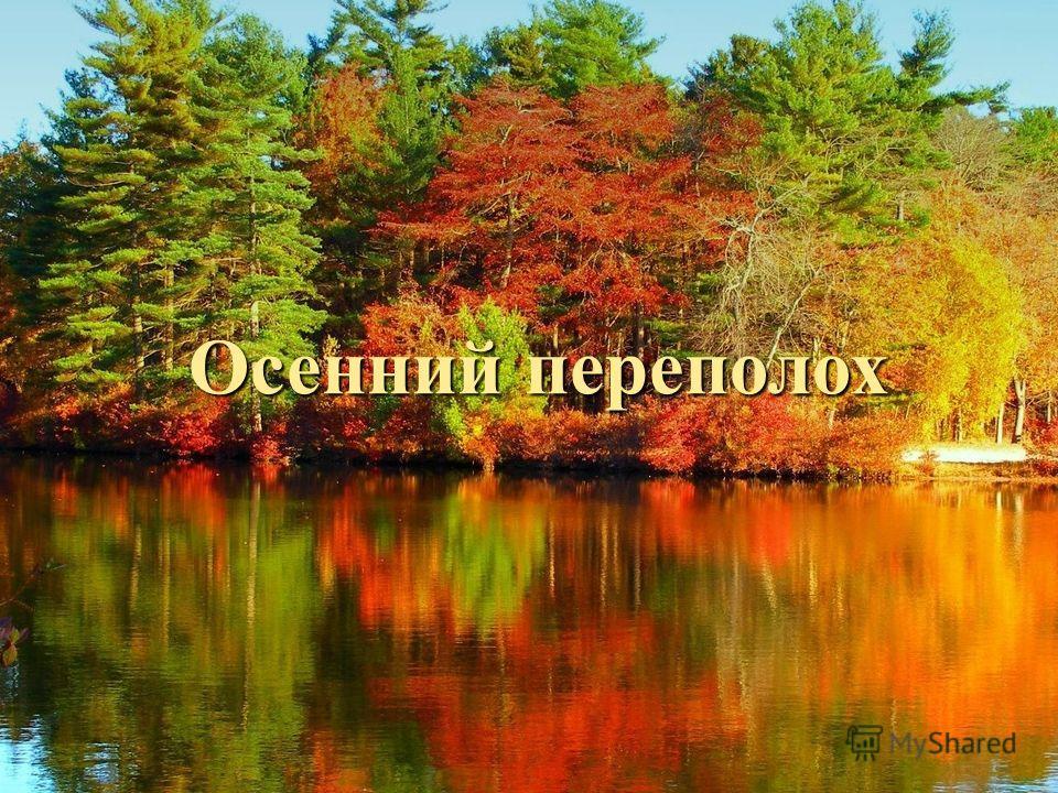 Осенний переполох