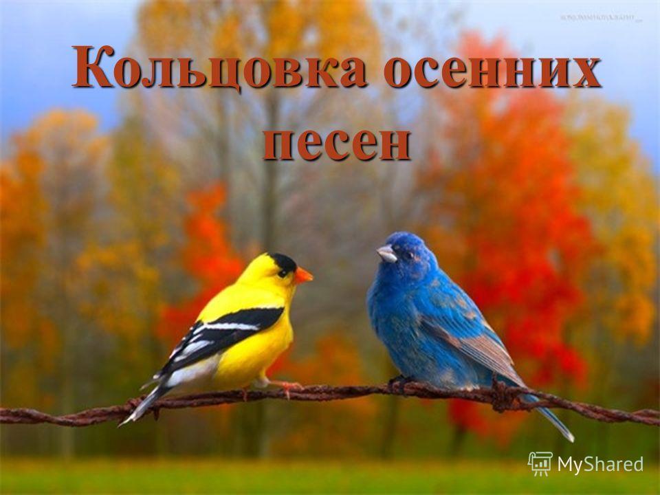 Кольцовка осенних песен