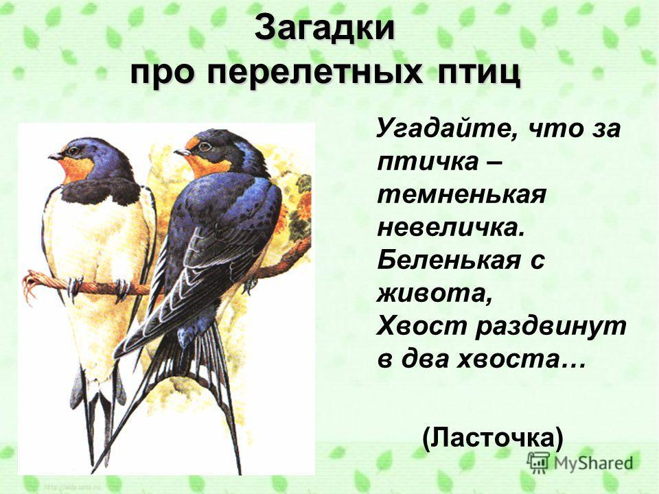 Загадки про перелетных птиц Угадайте, что за птичка – темненькая невеличка. Беленькая с живота, Хвост раздвинут в два хвоста… (Ласточка)
