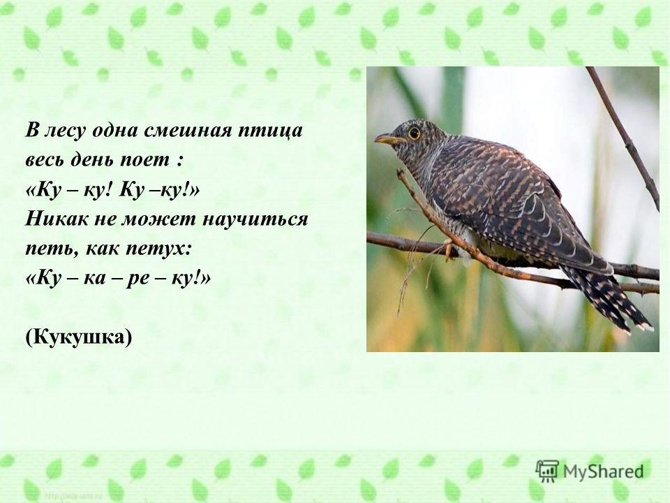 В лесу одна смешная птица весь день поет : «Ку – ку! Ку –ку!» Никак не может научиться петь, как петух: «Ку – ка – ре – ку!» (Кукушка)