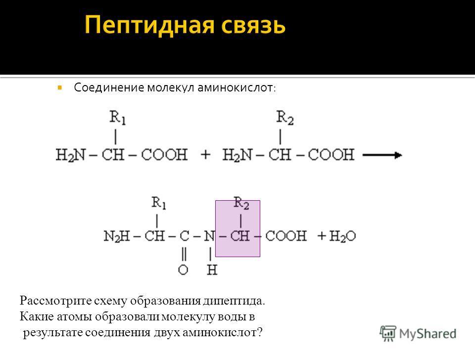 Соединение молекул аминокислот: Рассмотрите схему образования дипептида. Какие атомы образовали молекулу воды в результате соединения двух аминокислот?