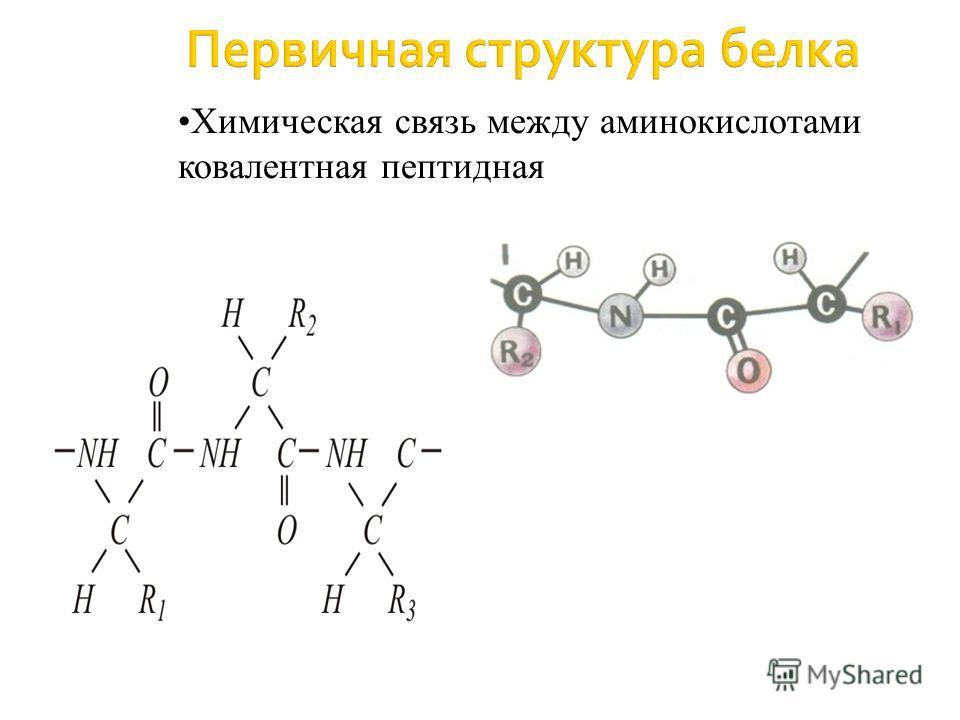 Первичная структура белка Химическая связь между аминокислотами ковалентная пептидная