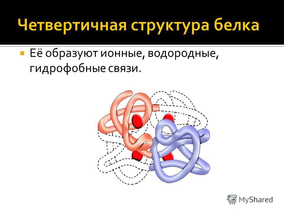 Её образуют ионные, водородные, гидрофобные связи.