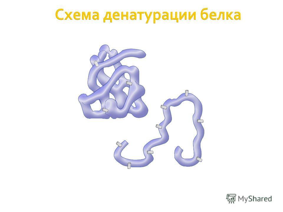 Схема денатурации белка