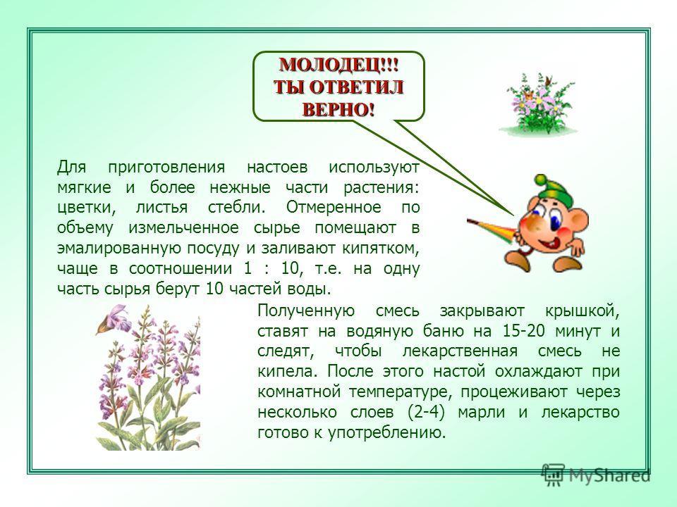 МОЛОДЕЦ!!! ТЫ ОТВЕТИЛ ВЕРНО! Для приготовления настоев используют мягкие и более нежные части растения: цветки, листья стебли. Отмеренное по объему измельченное сырье помещают в эмалированную посуду и заливают кипятком, чаще в соотношении 1 : 10, т.е