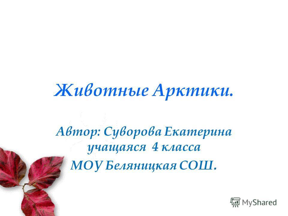 Животные Арктики. Автор: Суворова Екатерина учащаяся 4 класса МОУ Беляницкая СОШ.