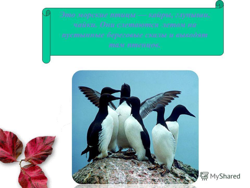 Это морские птицы кайры, глупыши, чайки. Они слетаются летом на пустынные береговые скалы и выводят там птенцов.