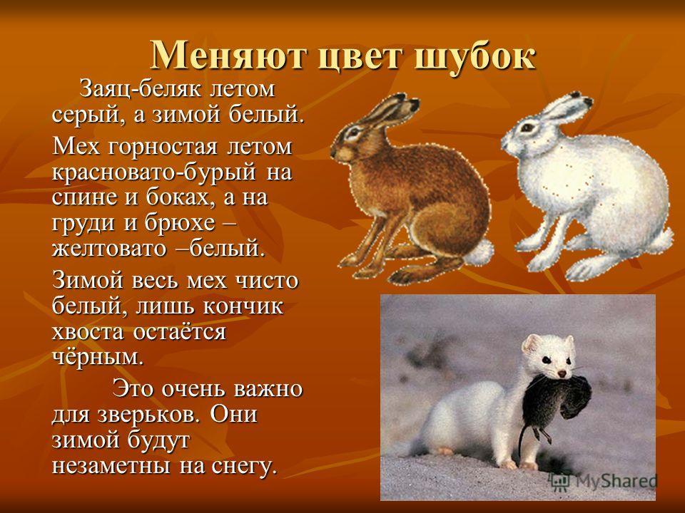Как животные готовятся к зиме Летом звери ходят в лёгких шубах, но они не спасут их от зимних холодов. Летом звери ходят в лёгких шубах, но они не спасут их от зимних холодов. Вот почему осенью зверьки линяют. Вот почему осенью зверьки линяют. Линька