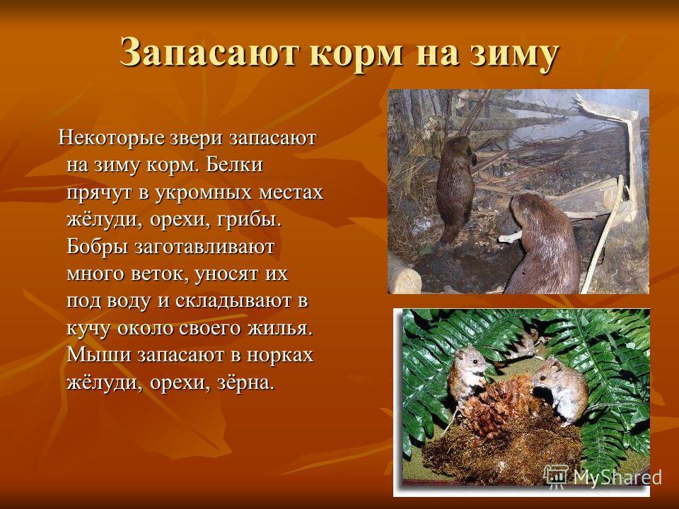Меняют цвет шубок Летом у рыси мех короче, с рыжеватым оттенком. Зимой длиннее, гуще и оттенок его светло – серый. Летом у рыси мех короче, с рыжеватым оттенком. Зимой длиннее, гуще и оттенок его светло – серый.