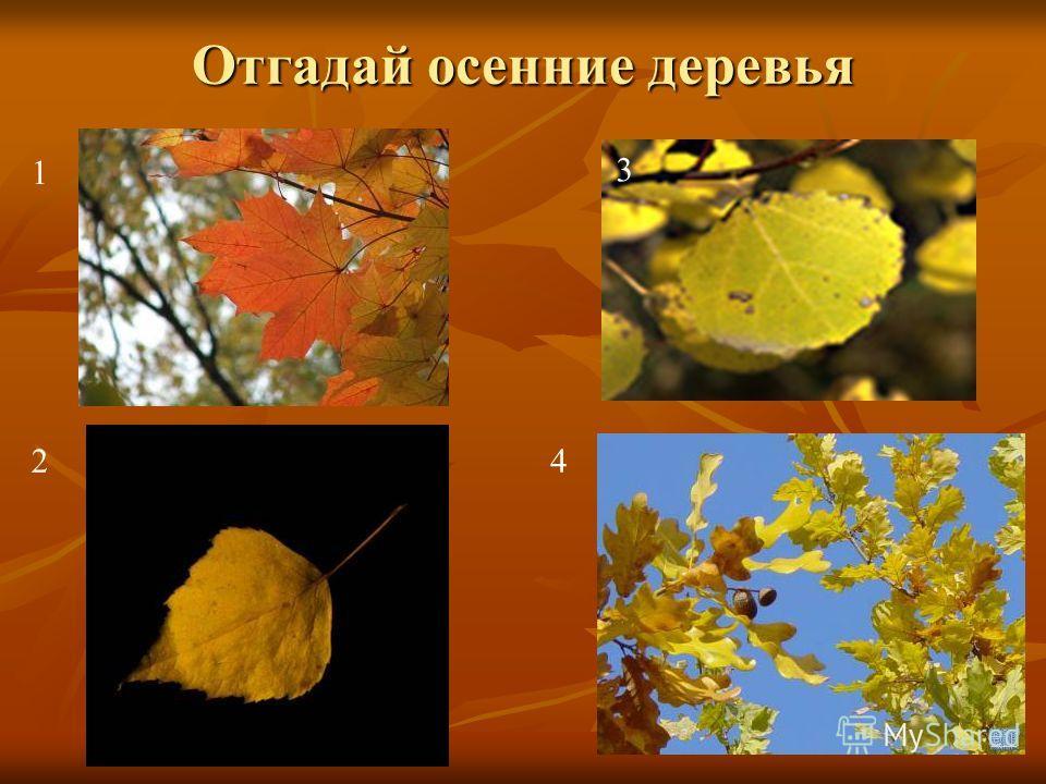 Осенние листья по ветру кружат, Осенние листья в тревоге вопят: