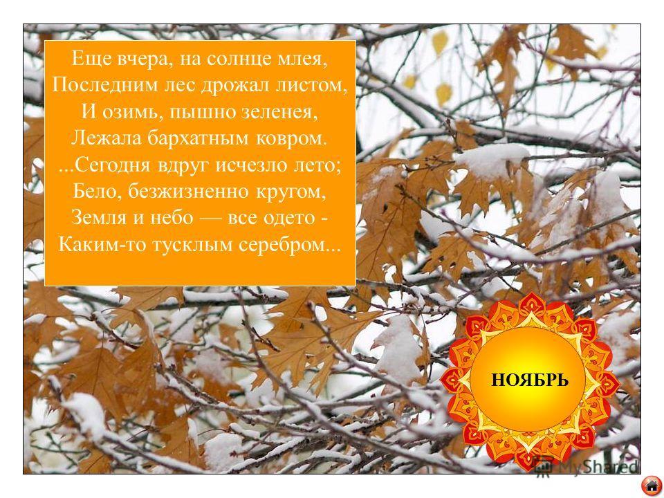 2) Плачут ивушки, осинки: Осень листья рвёт с ветвей. У сосёнки ни слезинки – Платье зелено на ней! Хоть зима, хоть весна – Вся в зелёном сосна!