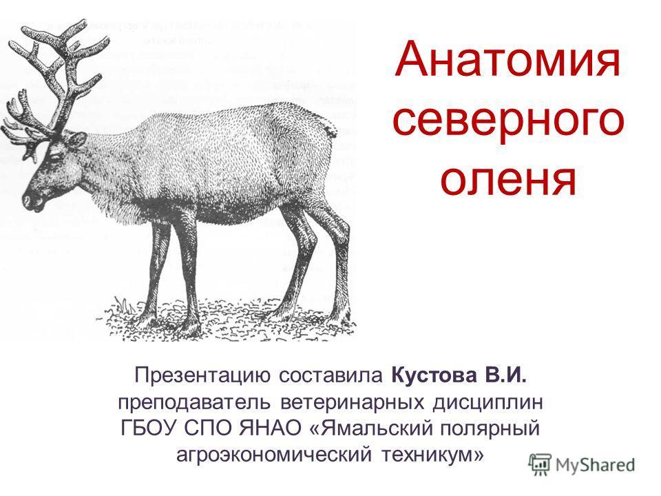 Анатомия северного оленя Презентацию составила Кустова В.И. преподаватель ветеринарных дисциплин ГБОУ СПО ЯНАО «Ямальский полярный агроэкономический техникум»