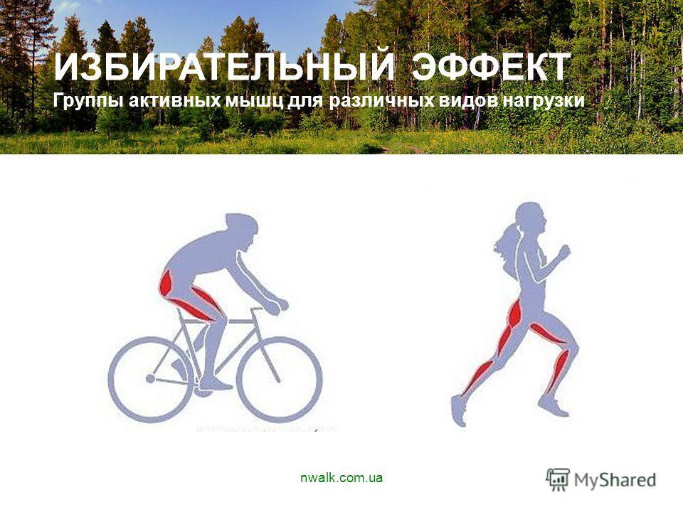 АПУЫАВП ИЗБИРАТЕЛЬНЫЙ ЭФФЕКТ Группы активных мышц для различных видов нагрузки nwalk.com.ua