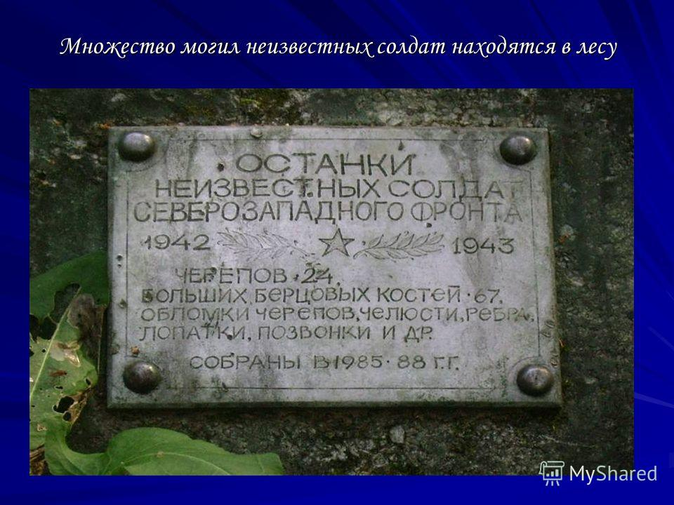 Множество могил неизвестных солдат находятся в лесу