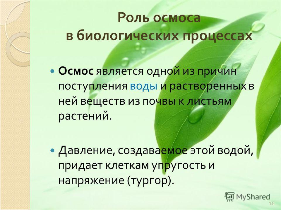 Роль осмоса в биологических процессах Осмос является одной из причин поступления воды и растворенных в ней веществ из почвы к листьям растений. Давление, создаваемое этой водой, придает клеткам упругость и напряжение ( тургор ). 16
