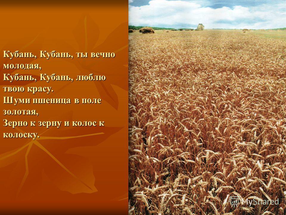 Кубань, Кубань, ты вечно молодая, Кубань, Кубань, люблю твою красу. Шуми пшеница в поле золотая, Зерно к зерну и колос к колоску.