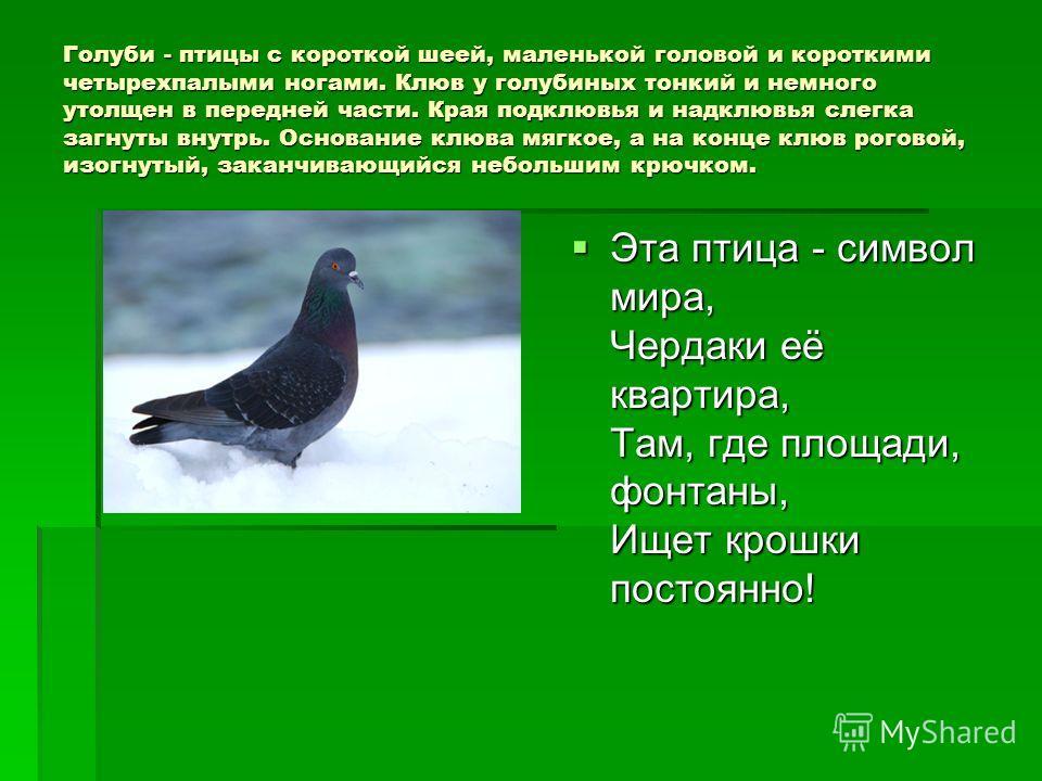 Голуби - птицы с короткой шеей, маленькой головой и короткими четырехпалыми ногами. Клюв у голубиных тонкий и немного утолщен в передней части. Края подклювья и надклювья слегка загнуты внутрь. Основание клюва мягкое, а на конце клюв роговой, изогнут