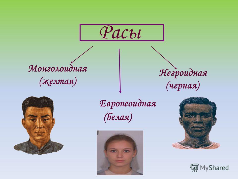 Расы Монголоидная (желтая) Европеоидная (белая) Негроидная (черная)