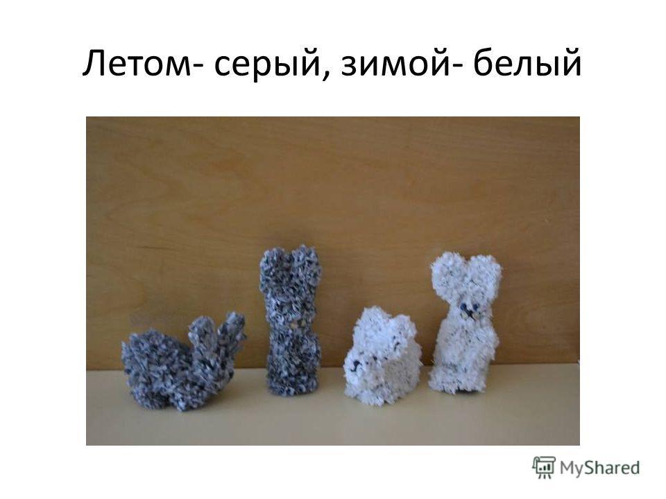 Летом- серый, зимой- белый