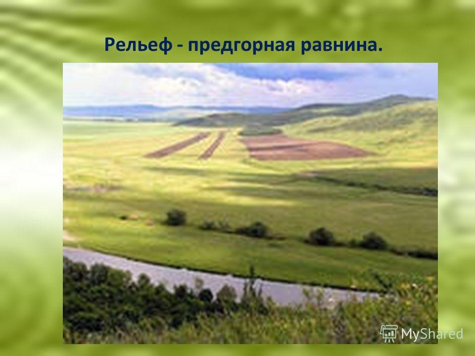 Рельеф - предгорная равнина.
