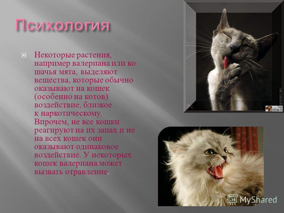 Некоторые растения, например валериана или кошачья мята, выделяют вещества, которые обычно оказывают на кошек ( особенно на котов ) воздействие, близкое к наркотическому. Впрочем, не все кошки реагируют на их запах и не на всех кошек они оказывают од
