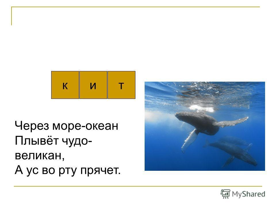 кит Через море-океан Плывёт чудо- великан, А ус во рту прячет.