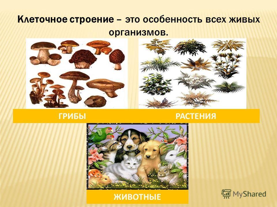 Клеточное строение – это особенность всех живых организмов. ГРИБЫРАСТЕНИЯ ЖИВОТНЫЕ
