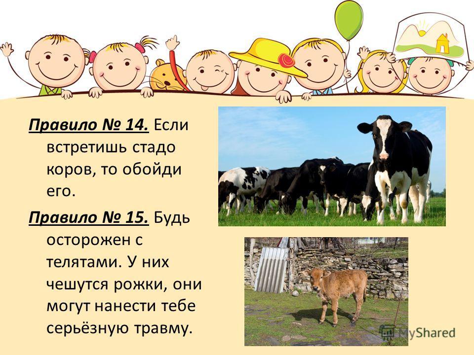 Правило 14. Если встретишь стадо коров, то обойди его. Правило 15. Будь осторожен с телятами. У них чешутся рожки, они могут нанести тебе серьёзную травму.