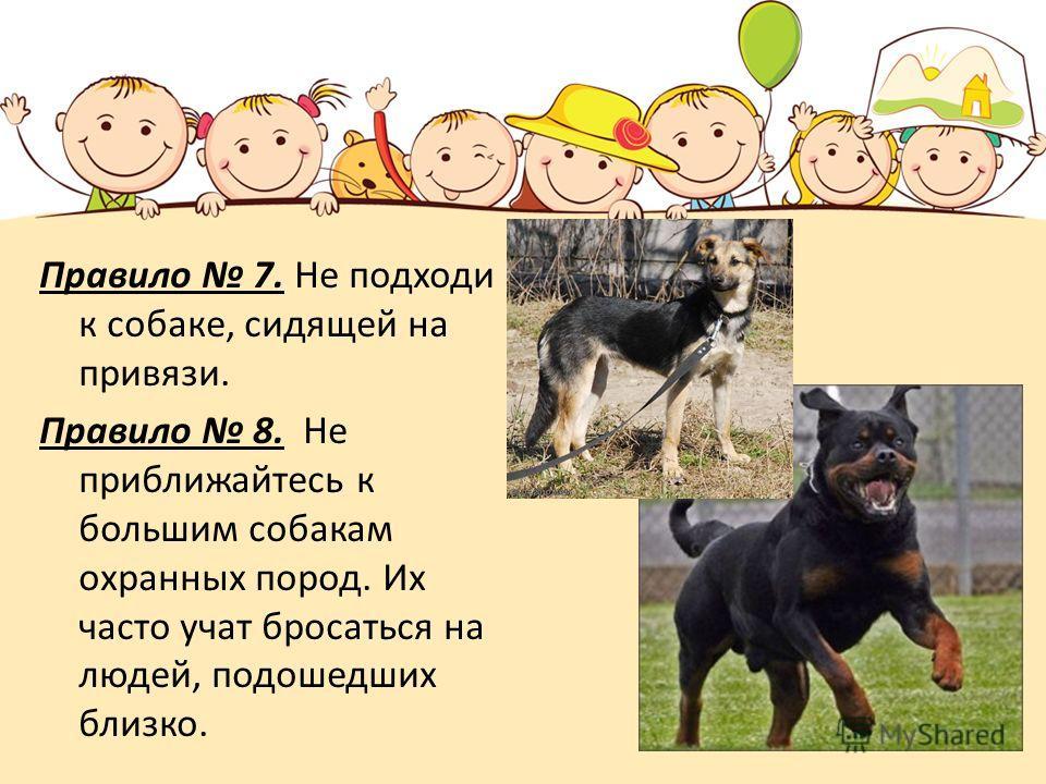 Правило 7. Не подходи к собаке, сидящей на привязи. Правило 8. Не приближайтесь к большим собакам охранных пород. Их часто учат бросаться на людей, подошедших близко.