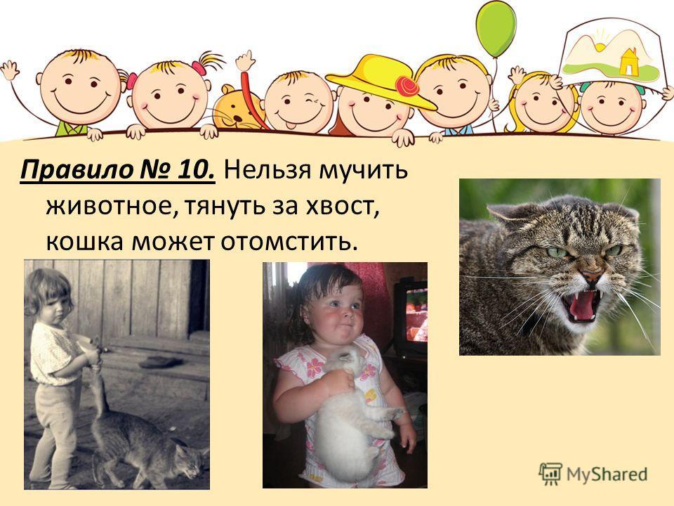 Правило 10. Нельзя мучить животное, тянуть за хвост, кошка может отомстить.