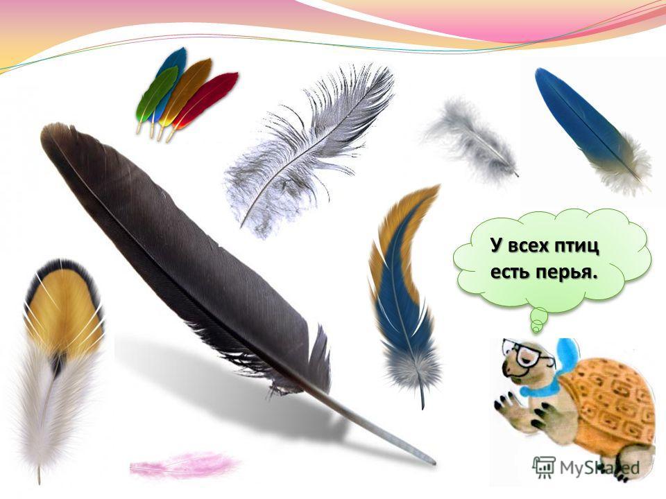 Не случайно птиц часто называют пернатые. Птицы - это животные, тело которых покрыто перьями.