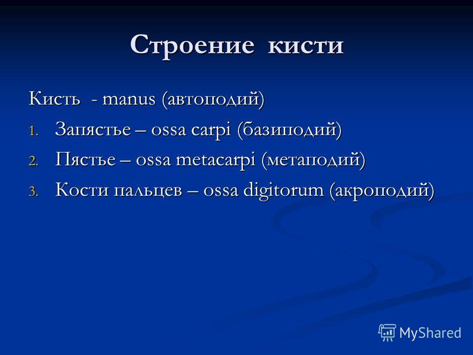 Строение кисти Кисть - manus (автоподий) 1. Запястье – ossa carpi (базиподий) 2. Пястье – ossa metacarpi (метаподий) 3. Кости пальцев – ossa digitorum (акроподий)