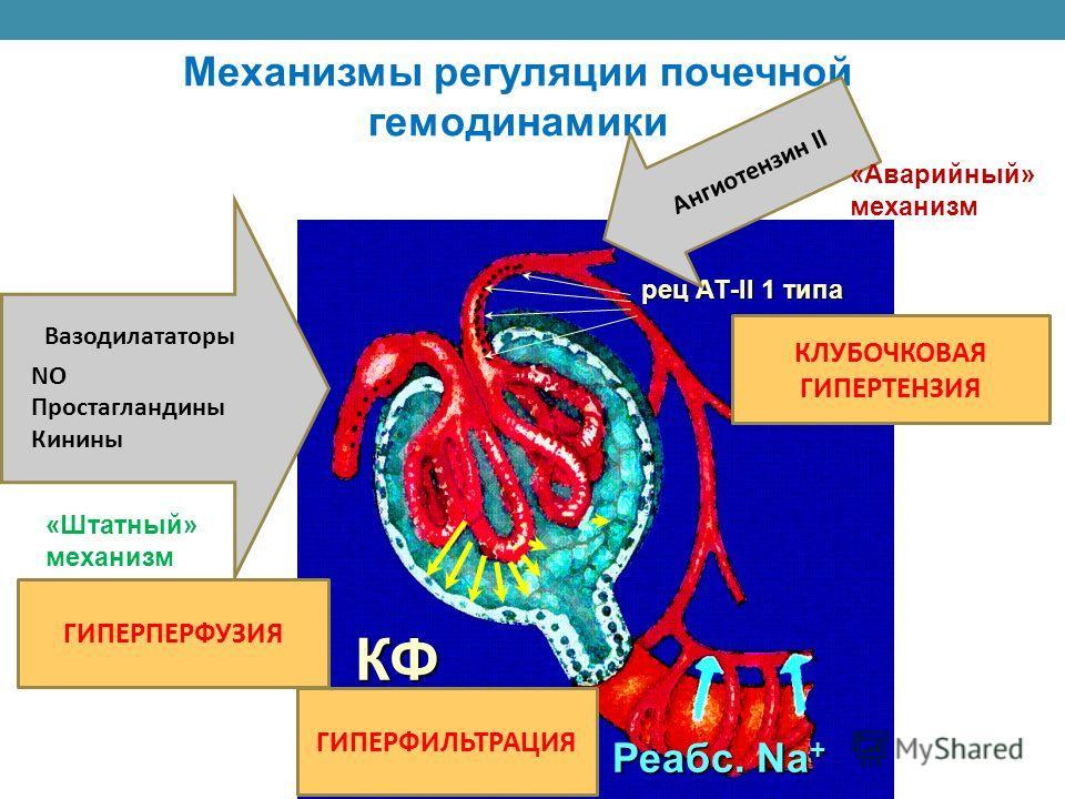 Механизмы регуляции почечной гемодинамики КФ Реабс. Na + рец АТ-II 1 типа Вазодилататоры NO Простагландины Кинины «Штатный» механизм Ангиотензин II «Аварийный» механизм ГИПЕРПЕРФУЗИЯ КЛУБОЧКОВАЯ ГИПЕРТЕНЗИЯ ГИПЕРФИЛЬТРАЦИЯ