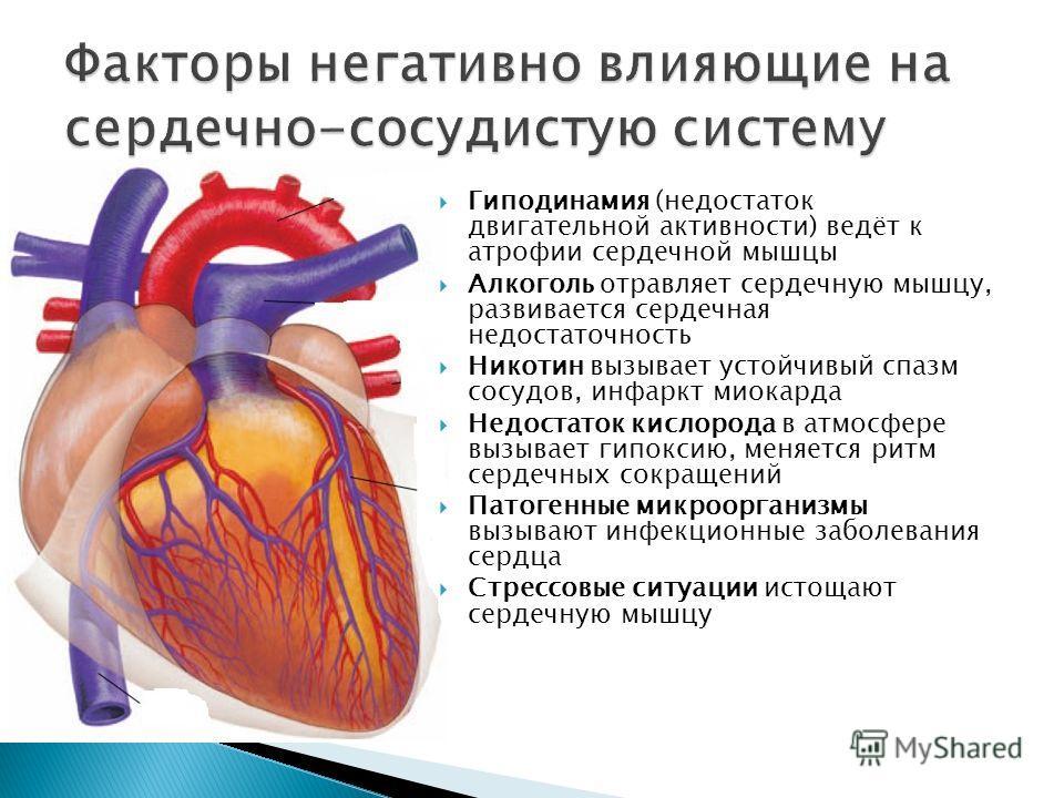 Гиподинамия (недостаток двигательной активности) ведёт к атрофии сердечной мышцы Алкоголь отравляет сердечную мышцу, развивается сердечная недостаточность Никотин вызывает устойчивый спазм сосудов, инфаркт миокарда Недостаток кислорода в атмосфере вы