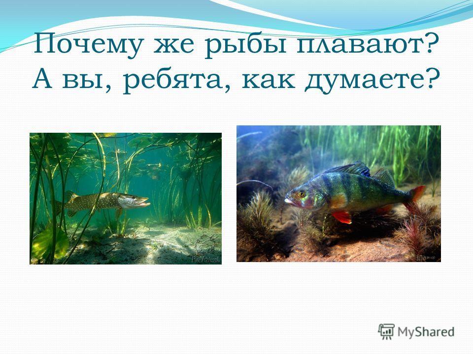 Почему же рыбы плавают? А вы, ребята, как думаете?