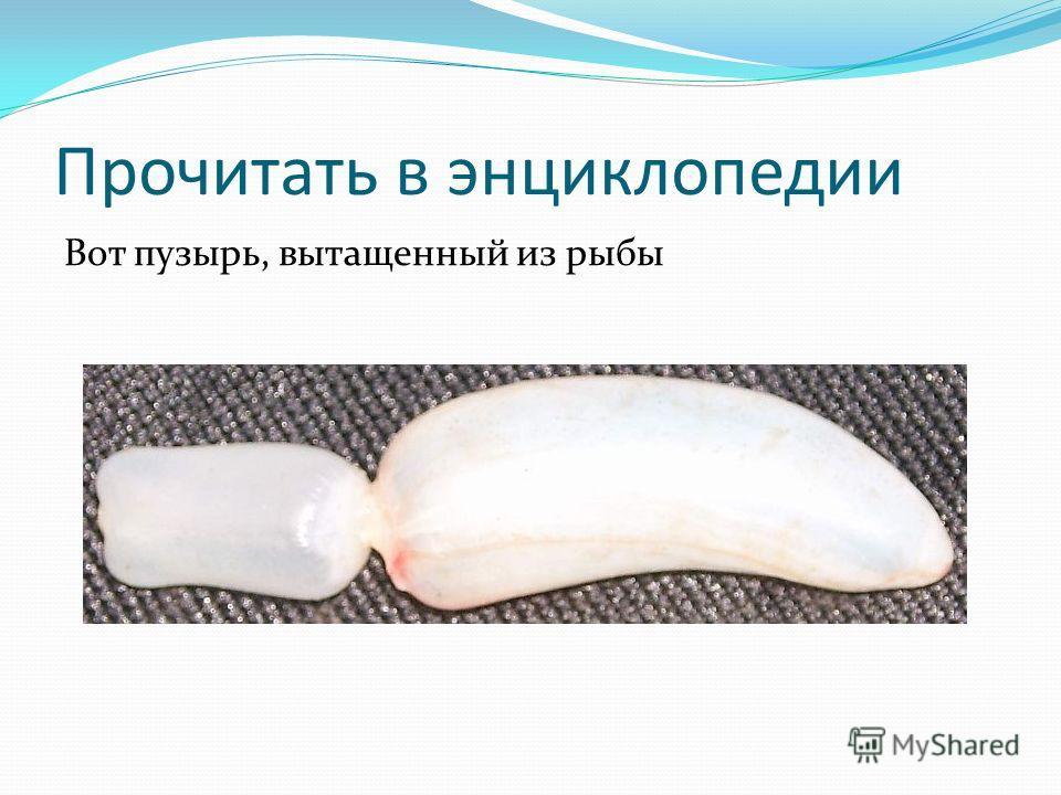 Прочитать в энциклопедии Вот пузырь, вытащенный из рыбы