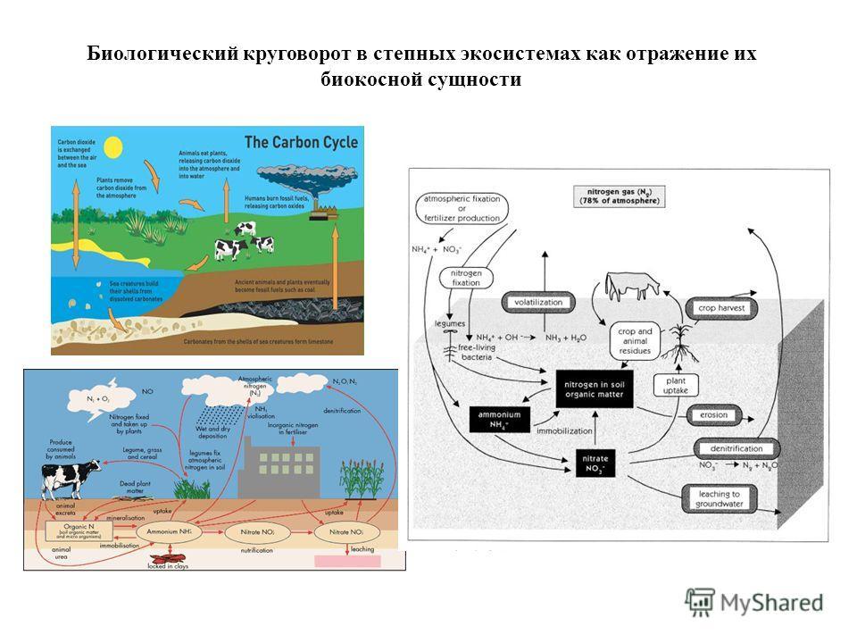 Биологический круговорот в степных экосистемах как отражение их биокосной сущности