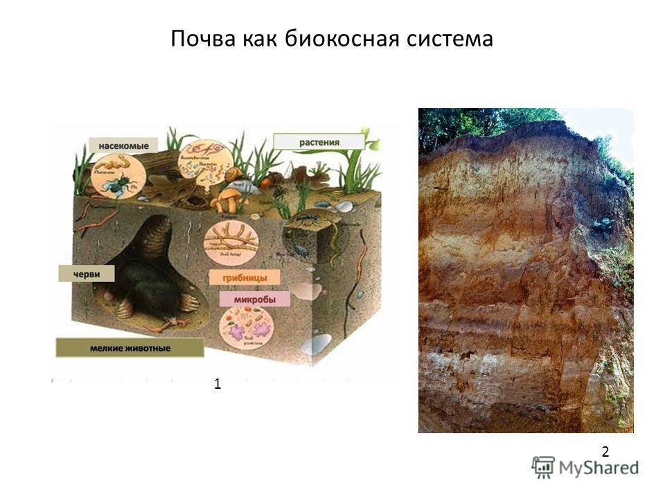 Почва как биокосная система 1 2