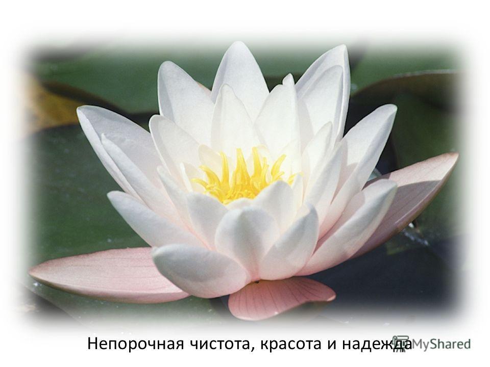 Непорочная чистота, красота и надежда
