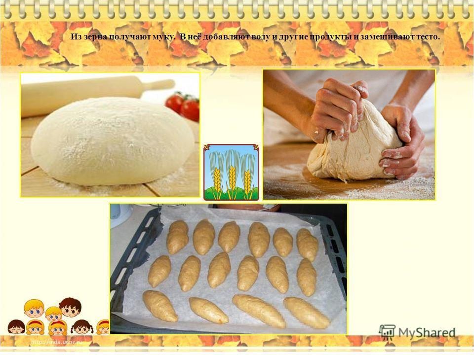 Из зерна получают муку. В неё добавляют воду и другие продукты и замешивают тесто.