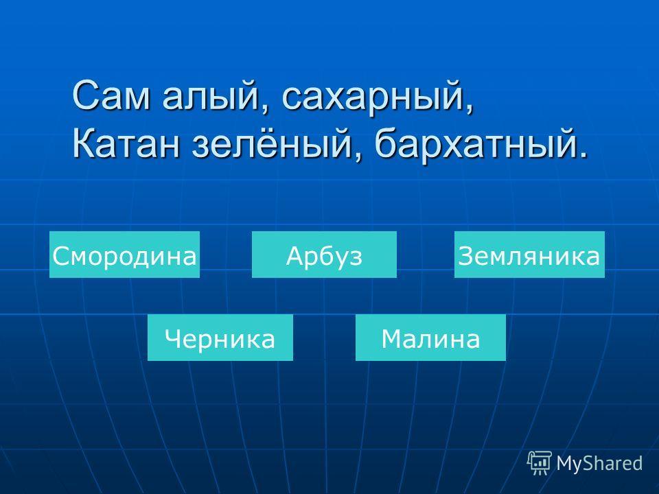 Тыква КапустаМорковь Редис Картофель Был ребёнком – не знал пелёнок, Стал стариком – сто пелёнок на нём.