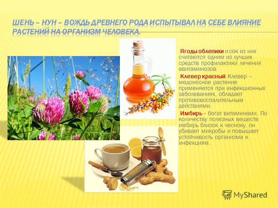 Ягоды облепихи и сок из них считаются одним из лучших средств профилактики лечения авитаминозов Клевер красный. Клевер – медоносное растение применяется при инфекционных заболеваниях, обладает противовоспалительным действиями. Имбирь – богат витамина