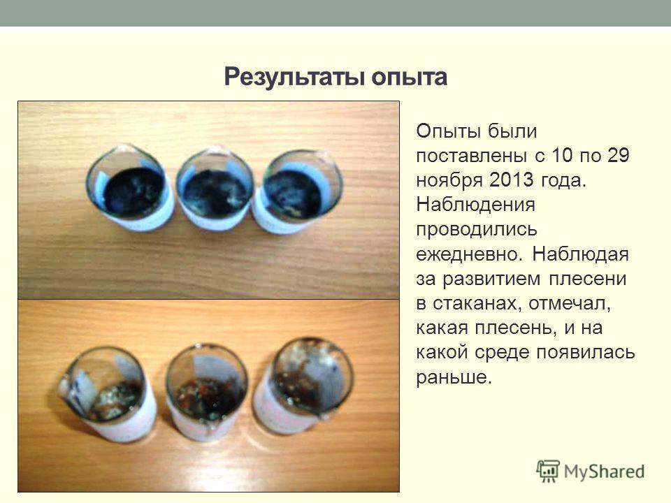 Результаты опыта Опыты были поставлены с 10 по 29 ноября 2013 года. Наблюдения проводились ежедневно. Наблюдая за развитием плесени в стаканах, отмечал, какая плесень, и на какой среде появилась раньше.