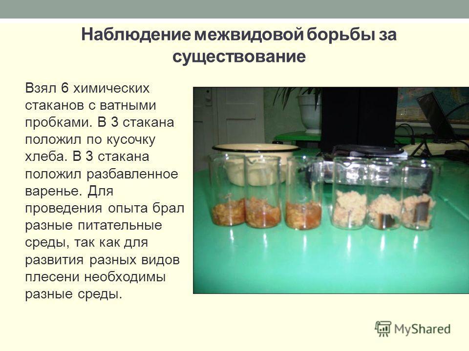 Наблюдение межвидовой борьбы за существование Взял 6 химических стаканов с ватными пробками. В 3 стакана положил по кусочку хлеба. В 3 стакана положил разбавленное варенье. Для проведения опыта брал разные питательные среды, так как для развития разн