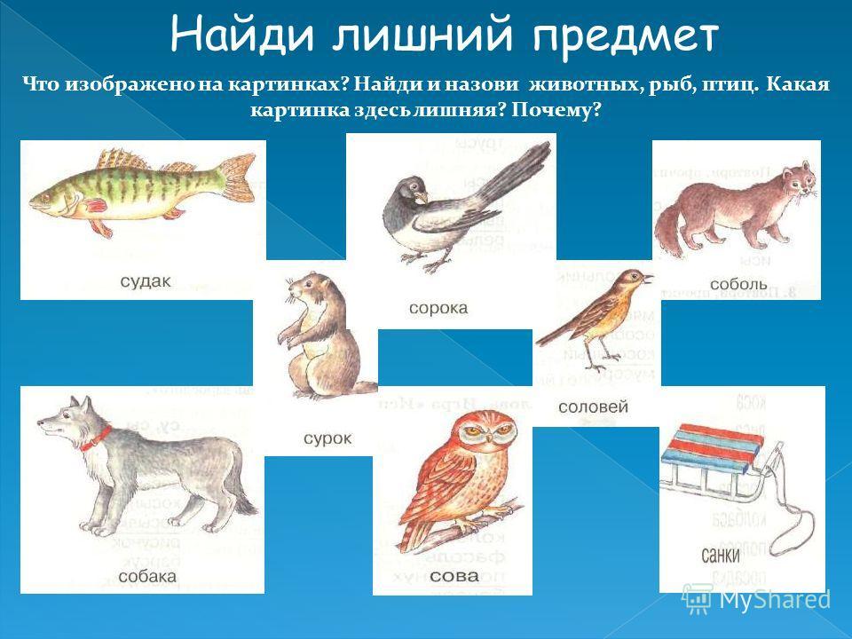 Что изображено на картинках? Найди и назови животных, рыб, птиц. Какая картинка здесь лишняя? Почему? Найди лишний предмет