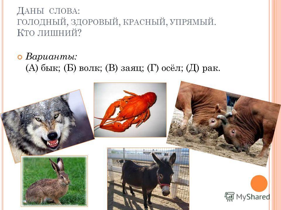 Д АНЫ СЛОВА : ГОЛОДНЫЙ, ЗДОРОВЫЙ, КРАСНЫЙ, УПРЯМЫЙ. К ТО ЛИШНИЙ ? Варианты: (А) бык; (Б) волк; (В) заяц; (Г) осёл; (Д) рак.