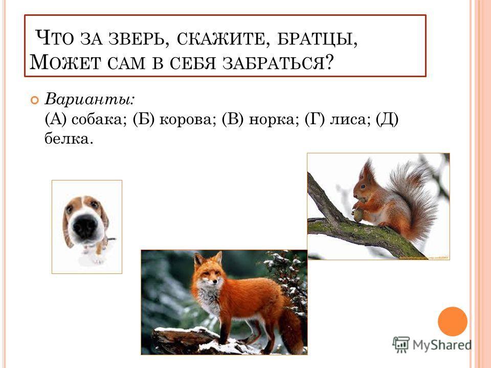 Ч ТО ЗА ЗВЕРЬ, СКАЖИТЕ, БРАТЦЫ, М ОЖЕТ САМ В СЕБЯ ЗАБРАТЬСЯ ? Варианты: (А) собака; (Б) корова; (В) норка; (Г) лиса; (Д) белка.