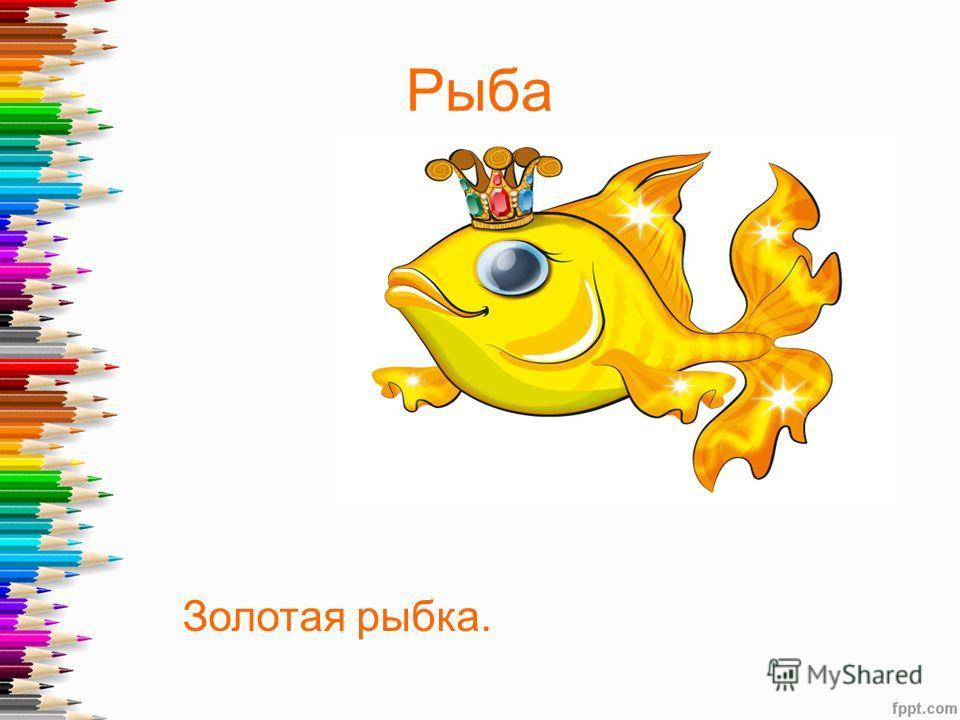 Рыба Золотая рыбка.